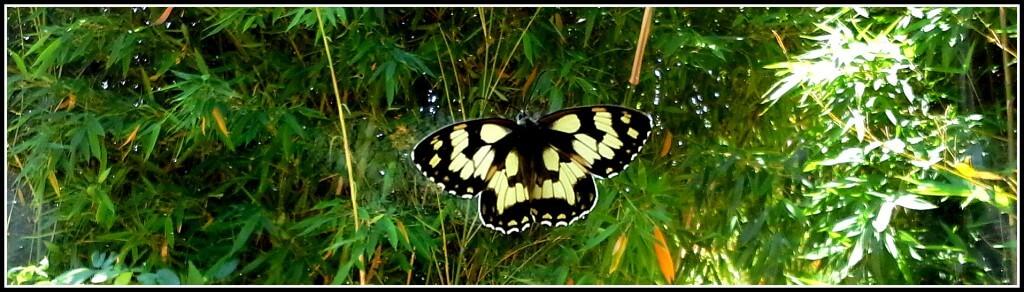papillon vole 1 +